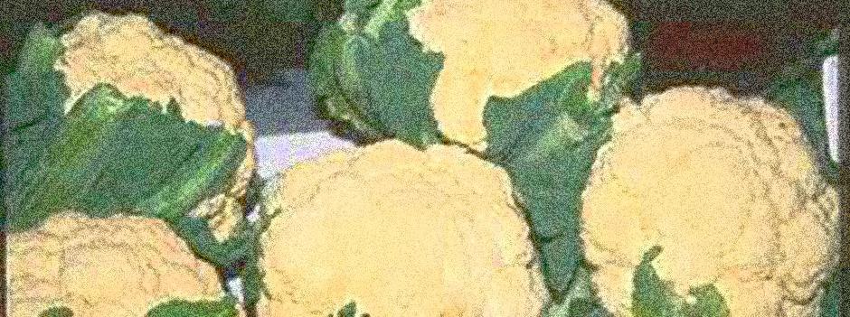 Blomkålris